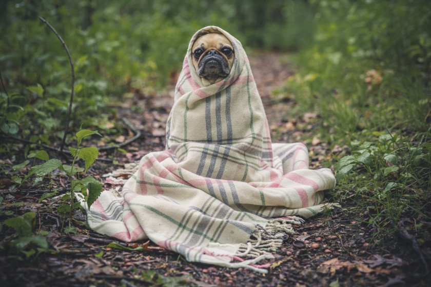 QLC is having more in common with this pug than you'd like to admit.